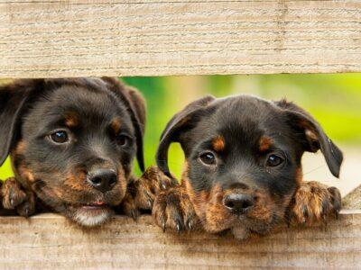 ก่อนที่จะซื้อสุนัขมาเลี้ยง ควรอ่านบทความนี้