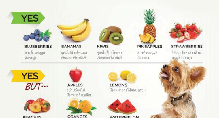 10 ผลไม้ชนิดไหนที่น้องหมากินได้บ้าง?