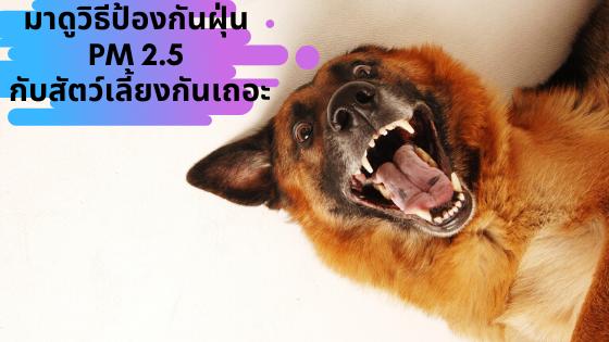 มาป้องกันฝุ่น PM 2.5 กับสัตว์เลี้ยงกันเถอะ !