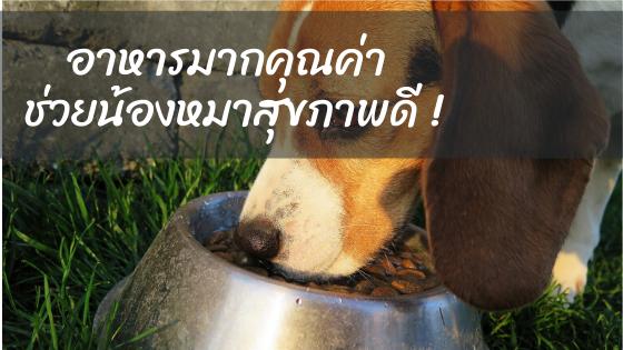 มาดูอาหารที่มีคุณค่ากับน้องหมา !!!