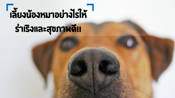 เลี้ยงน้องหมาอย่างไรให้สุขภาพดีและร่าเริงแจ๋มใส
