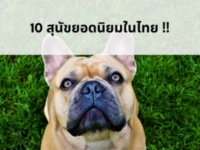 มาดูสุนัขยอดฮิตในไทย!!