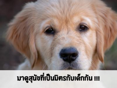 สุนัขพันธุ์ไหนรักเด็กบ้าง มาดูเลย