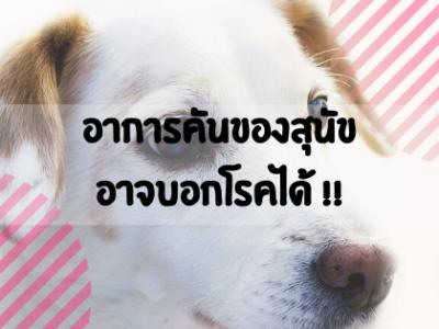 อาการคันของสุนัข อาจบอกโรคได้ !!