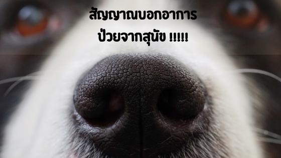 สัญญาณจากสุนัขที่กำลังบอกว่าป่วย!!