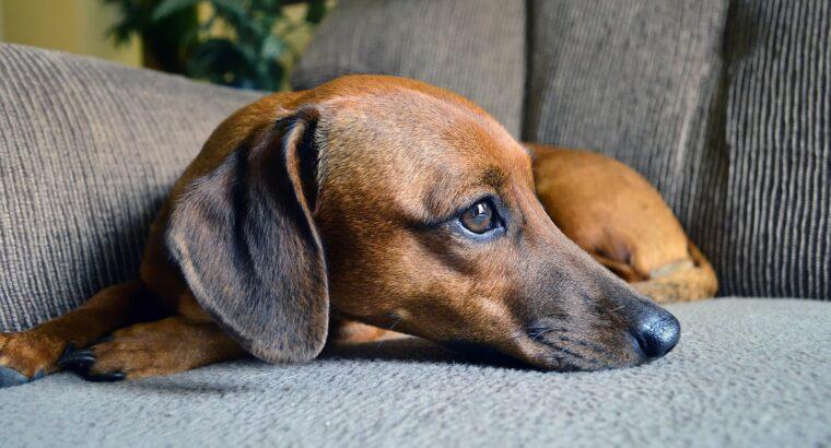 วิธีการลดกลิ่นสาบของน้องหมา