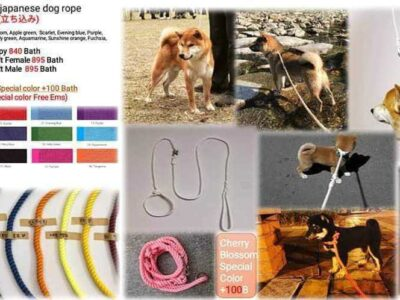 Japanese train dog rope