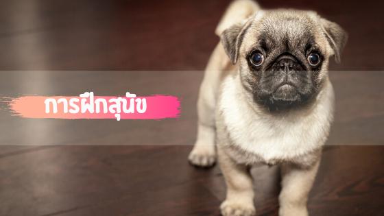 การฝึกสุนัข ให้เข้าใจภาษาเรา