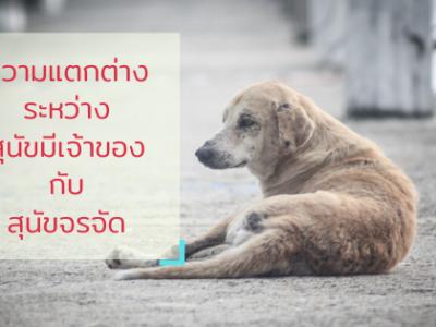 สุนัขที่มีเจ้าของกับสุนัขจรจัด