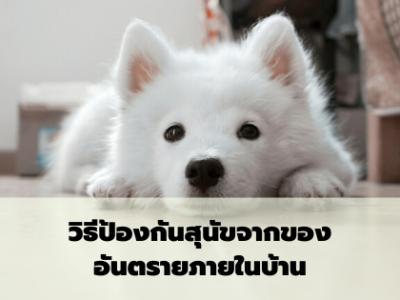 วิธีป้องกันสุนัขจากของอันตรายภายในบ้าน