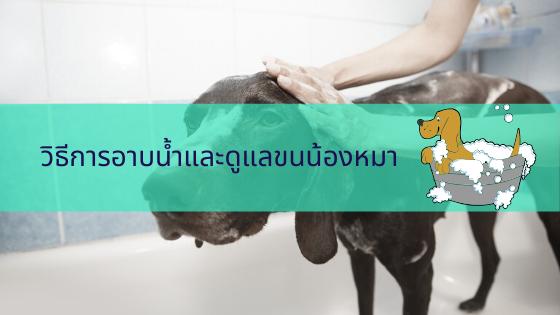 วิธีการอาบน้ำและดูแลขนน้องหมา