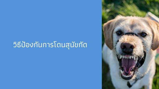 วิธีป้องกันสุนัขกัด