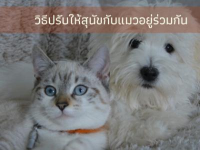 การทำให้แมวกับหมาอยู่ร่วมกันได้