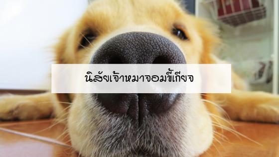 นิสัยของเจ้าหมาจอมขี้เกียจ