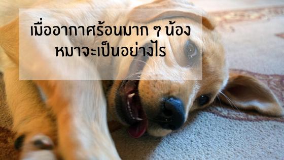 เมื่ออากาศร้อนมาก ๆ น้องหมาจะมีอาการยังไง