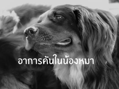 อาการคันในน้องหมา