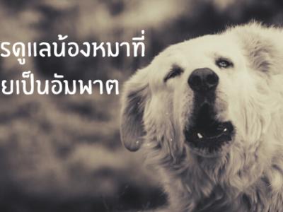 การดูแลน้องหมาที่ป่วยเป็นอัมพาต