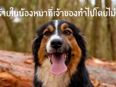 ภัยร้ายในน้องหมาที่เจ้าของทำโดยไม่รู้ตัว