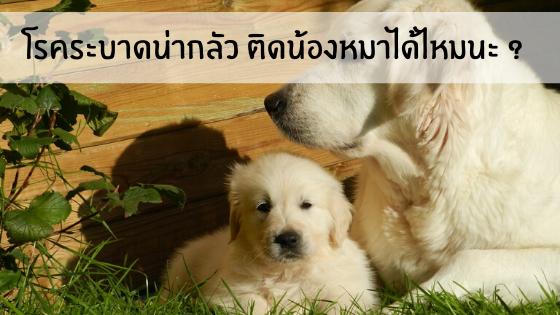 โรคระบาดน่ากลัว ติดน้องหมาได้ไหมนะ ?