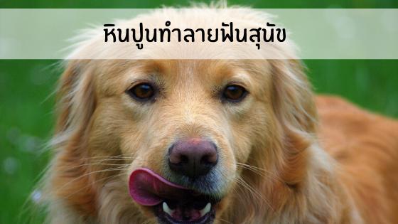หินปูนทำลายฟันสุนัข