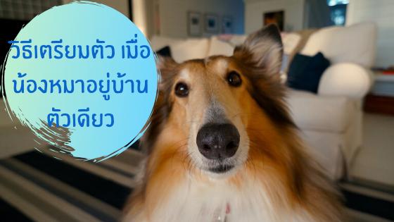 วิธีเตรียมตัว เมื่อน้องหมาอยู่บ้านตัวเดียว