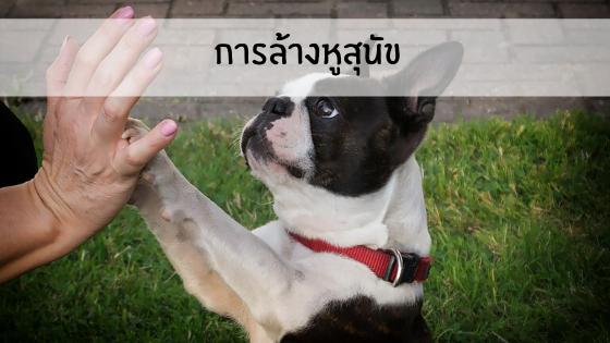 การล้างหูสุนัข