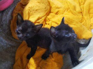 ขออนุญาต…หาบ้านด่วนๆ…🙏🙏🙏 ลูกแมว 2 ตัว🐈🐈