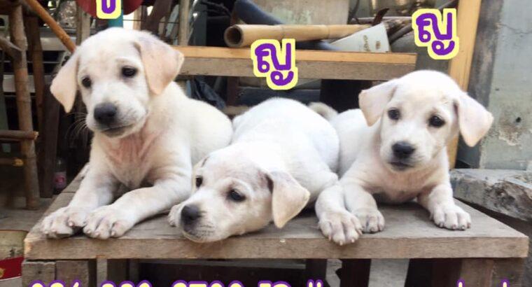 ขอรบกวนช่วยแชร์หาบ้านให้ลูกหมาน่ารักหน่อยคะ