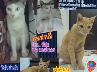 Cat Need Home for Adoption No Adoption fee