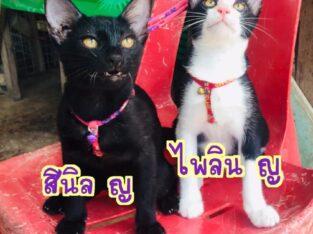 ขอรบกวนช่วยแชร์หาบ้านให้ #ลูกแมวน่ารัก หน่อยค่ะ